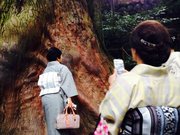 大きな木_R